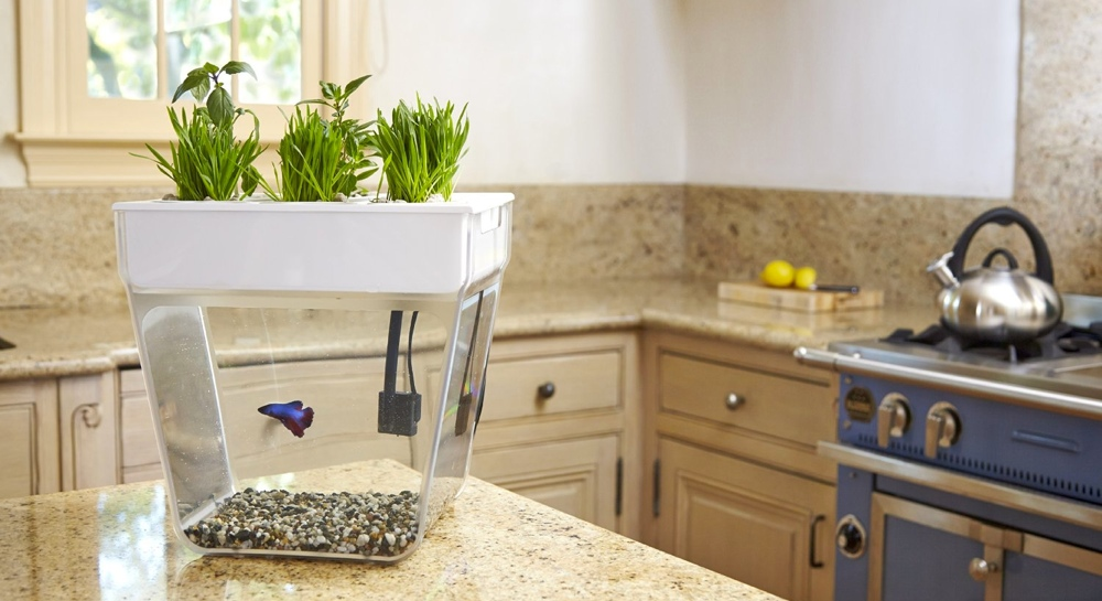how to keep fish tank clean naturally