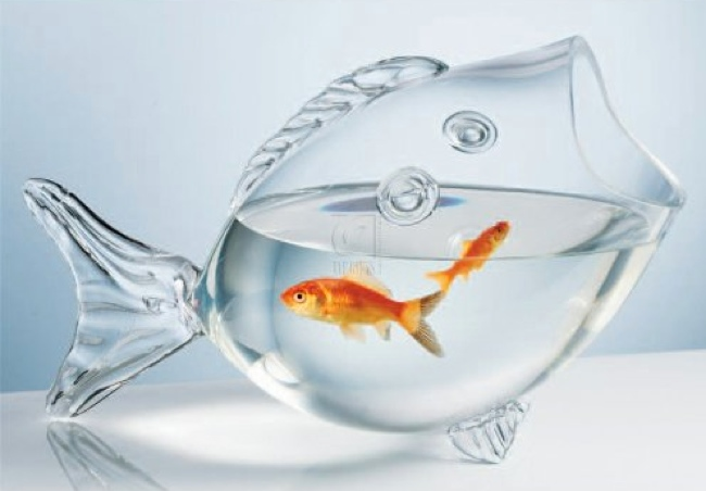 Glass fish bowl for Fish bowl glass