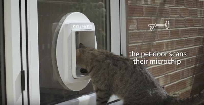 The Sureflap Microchip Pet Door Lets You Control Which Pets Go In