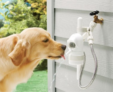 WaterDog Detects Your Dog And Dispenses Fresh Water Automatically