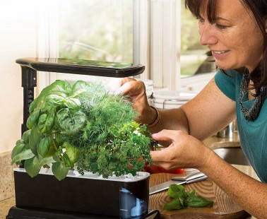 The Miracle-Gro AeroGarden Lets You Garden Year-Round Without the Use of Soil