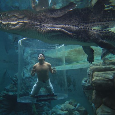 The Cage of Death – A Crocodile Dive Experience