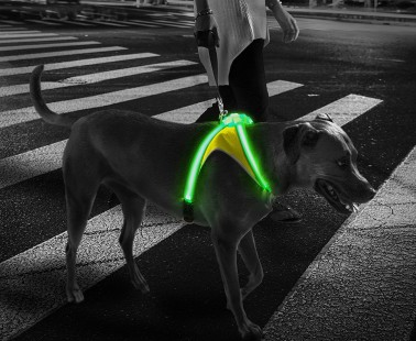 Keep Your Dog Safe From Nighttime Traffic With the LightHound