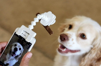 The Flexy Paw Treat Holder Makes It Easier for You to Take Selfies & Portraits of Your Dogs and Cats