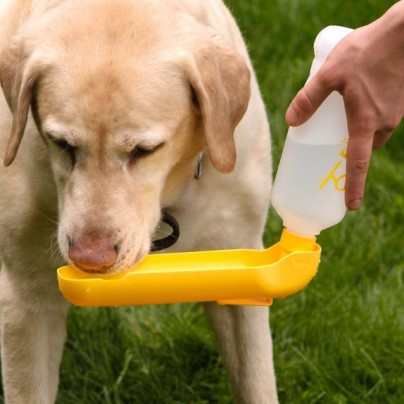 Easily Hydrate Your Hound With The Gulpy Water Dispenser