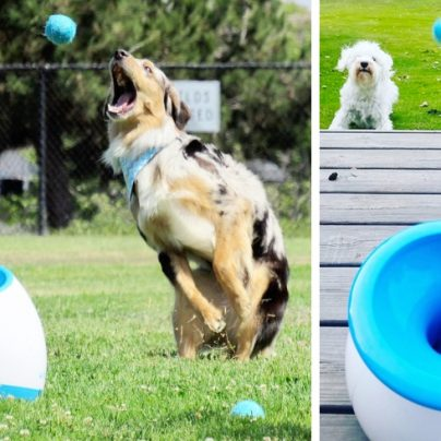 The Device That Lets Your Dog Play Fetch Whenever It Wants