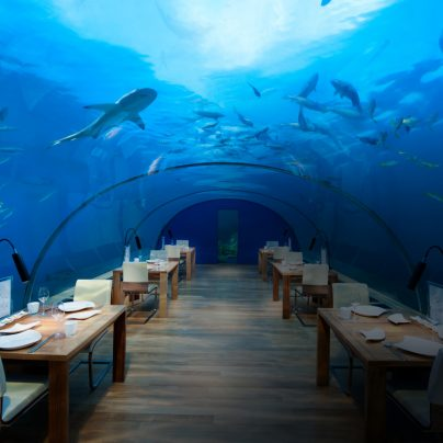 Eat, Sleep & Party Undersea